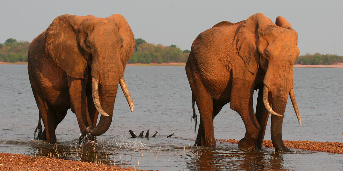 Elephants Kariba