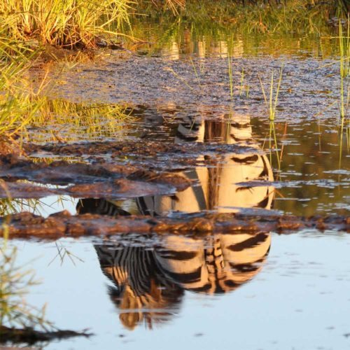 Mother-natures-reflections-saf4africa