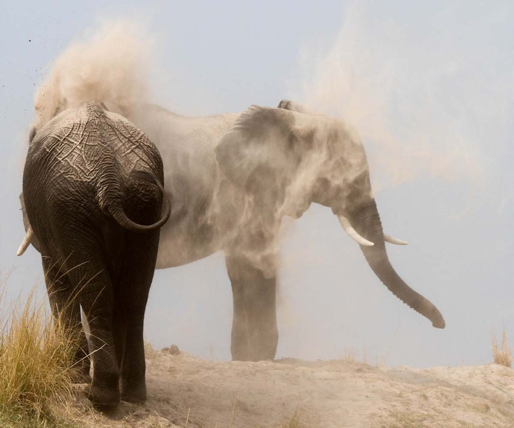 Chobe National Park Dust Elephants