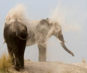 Saf4Africa Elephants Bathing in Dust