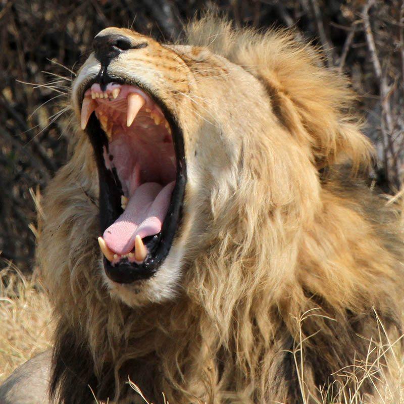 botswana-wildlife