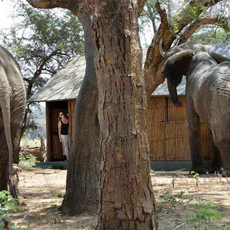 Old-mondoro-elephants-zambia-saf4africa
