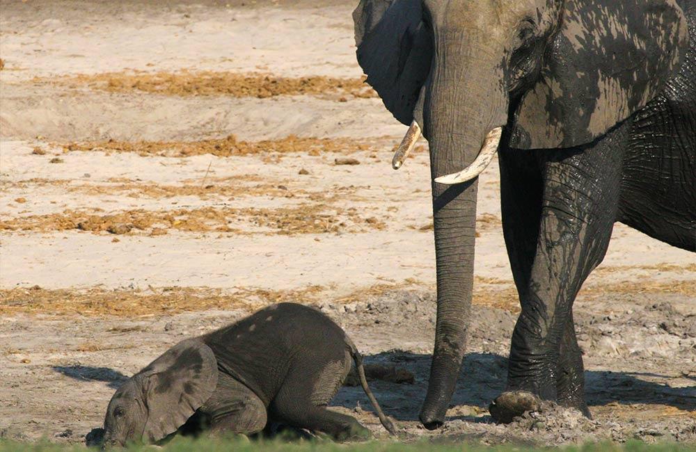Elephants Verneys Camp Hwange National Park